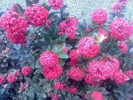 不知道的紅花