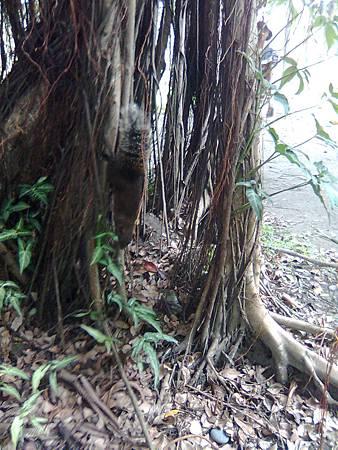 大安森林裡的松鼠