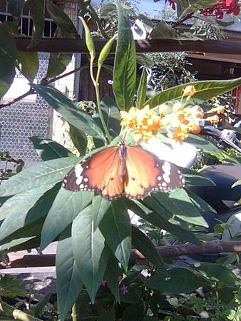 蝴蝶1123