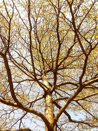 大安森林公園--樹枝