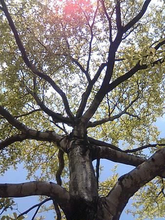 樹葉與天空