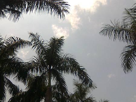 椰子樹與天空