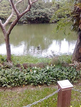 大安生態池