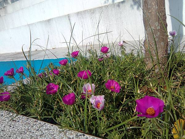 花圃小花-2