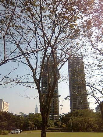 大安森林公園--建築中的大樓