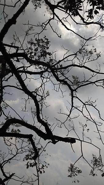 20140908樹與天空-1