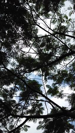 20141018樹葉間-2