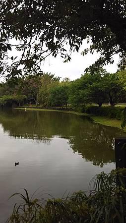 20150206大安森林公園-1