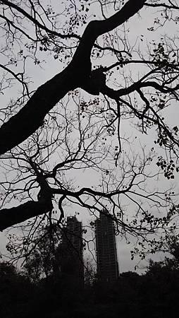 20150206大安森林公園-9