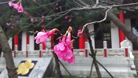 20150218路邊花草-3