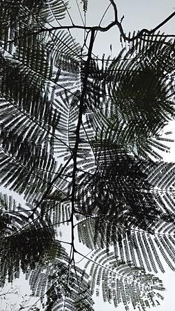 20150306大安森林-19