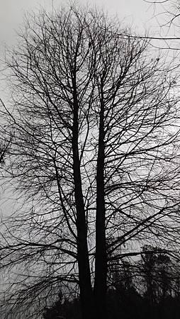 20150306大安森林-9