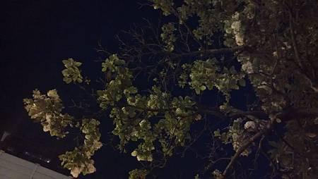20150327夜裡流蘇