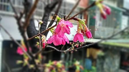 20160224路邊花草