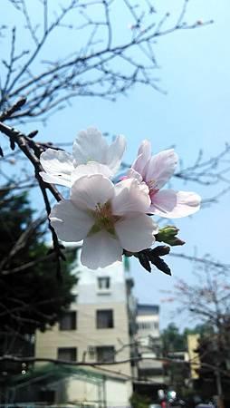 20160406路邊花草-8