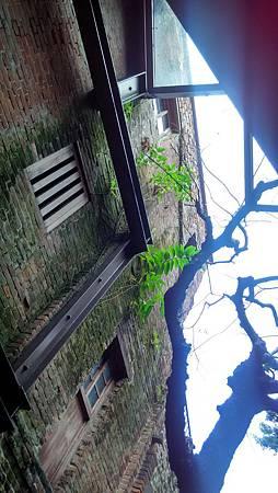 20170311剥皮療-1