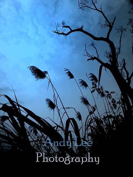 grass-L.jpg