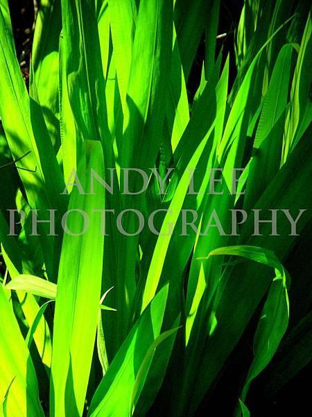 greenALP.jpg