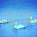 threebirds_ALP.jpg
