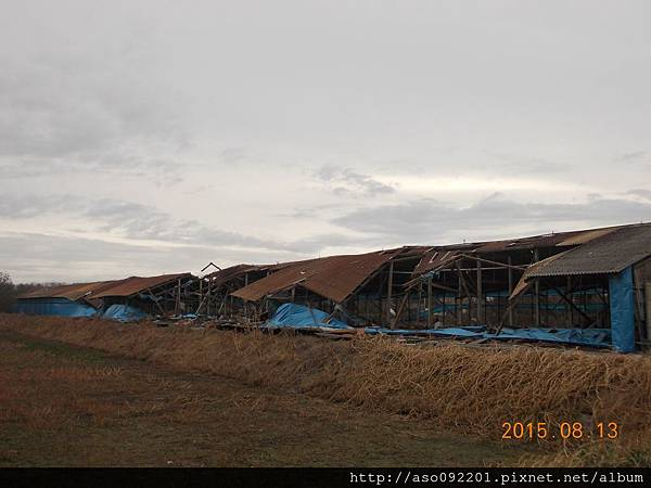 2015081605雞舍毀壞一
