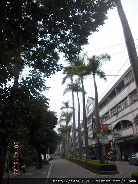 2015091506椰林大道
