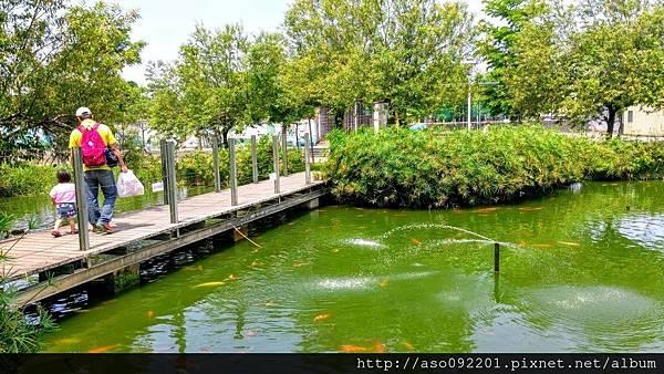 2016121809穿梭生態池的橋面