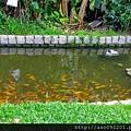 2017010111橋邊的水生植物與魚群