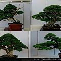 2017010807各種盆栽