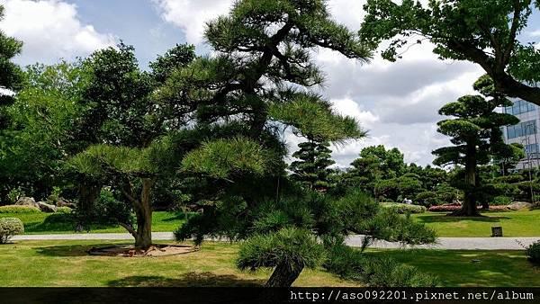 2017010821二葉松