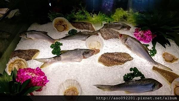 2017022241美味新鮮的魚