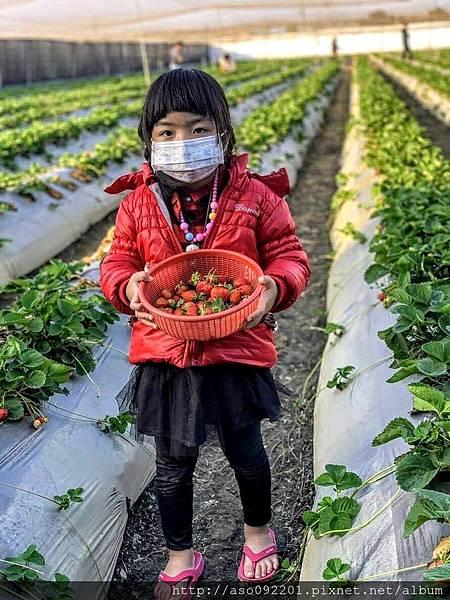2018121612漂亮的草莓