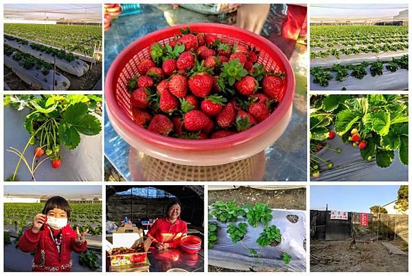 2018121601大彰化草莓園
