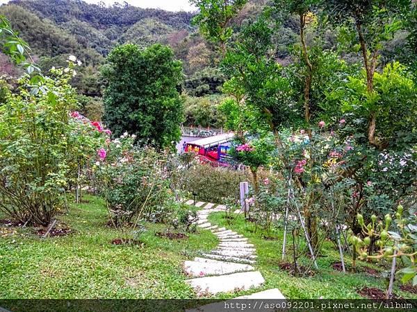 2018121705邊坡的玻瑰花園.jpg