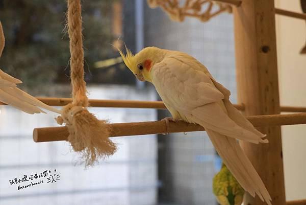 鳥10.JPG
