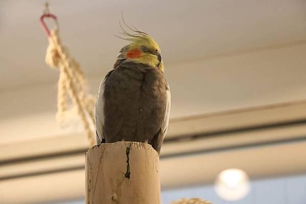 鳥27.JPG