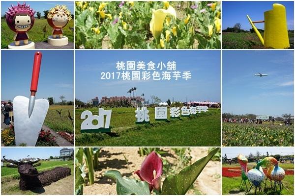 桃園彩色海芋季25-1