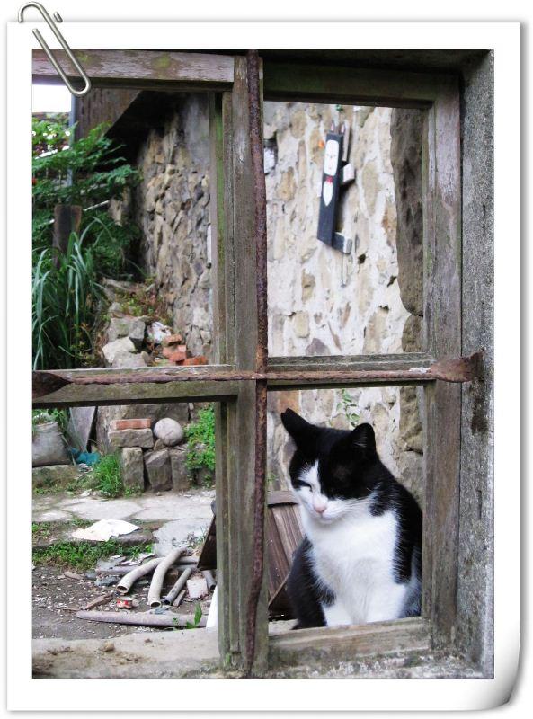 貓3.jpg