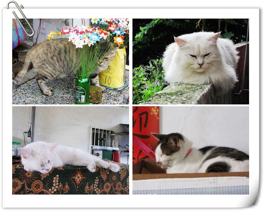 貓5.jpg