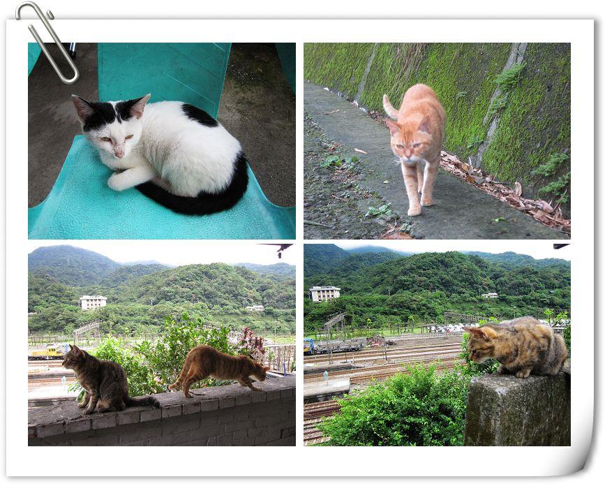 貓6.jpg
