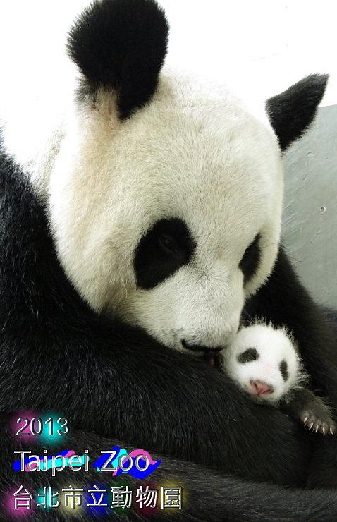 TAIPEI ZOO 貓熊