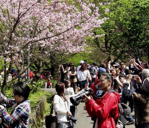 陽明山花季2013_1.jpg