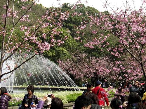 陽明山花季2013_7.jpg