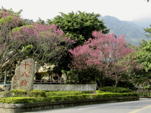 陽明山花季2013_12.jpg