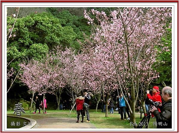 陽明山花季2013_16small.jpg