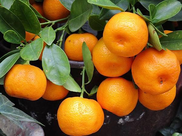 mandarin-1756766_1920