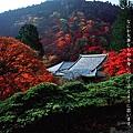 善峯寺autumn_2005_02_img_001.jpg