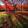 2-web-東福楓大景17-IMG_6002.jpg
