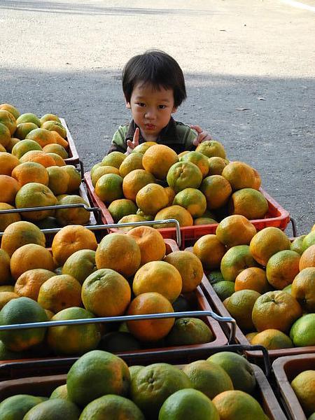 好多橘子喔