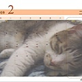 CAT-02.jpg