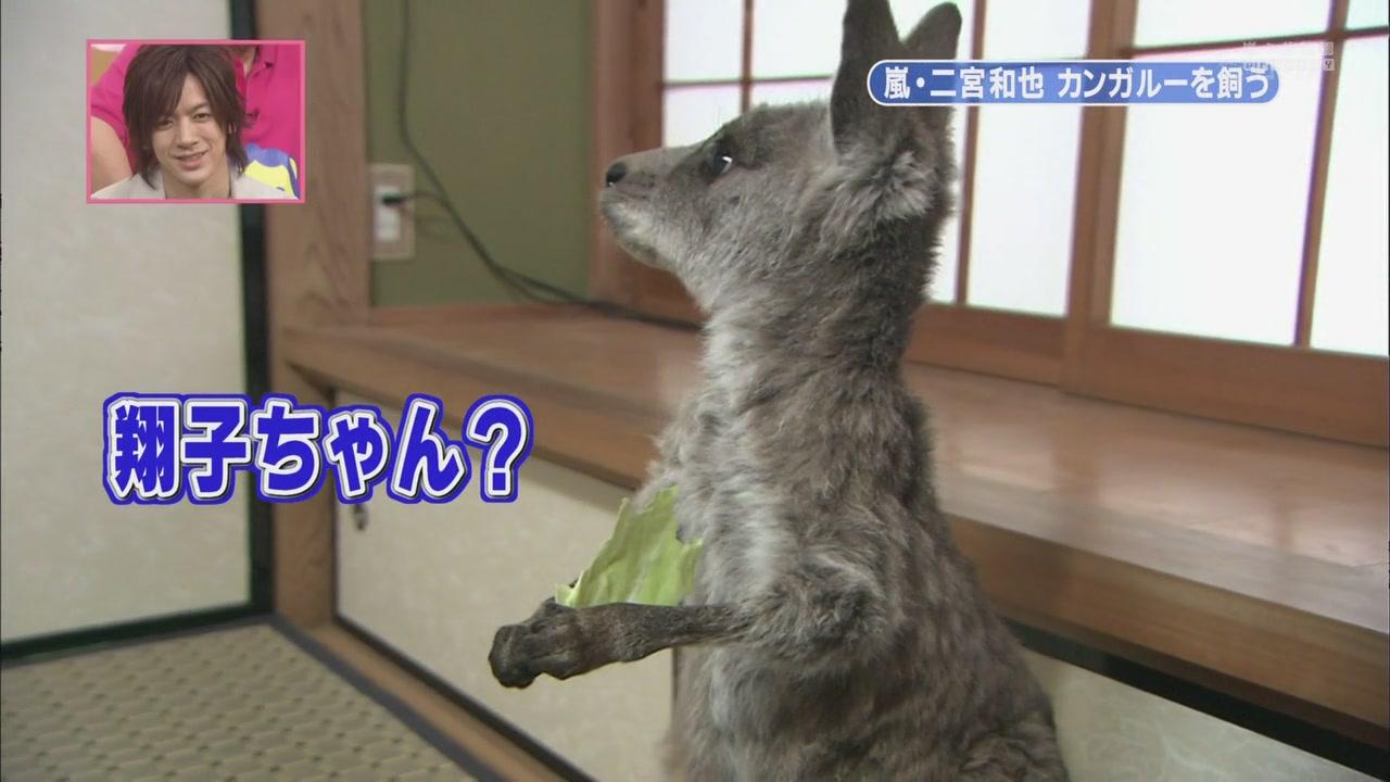[[HDTV] 110122 天才!志村どうぶつ園(二宮和也)[18-28-24].JPG
